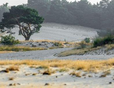 foto van Loonse en Drunense duinen